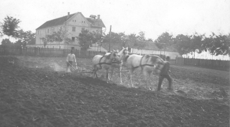 Oráč v Starej Pazove okolo roku 1920